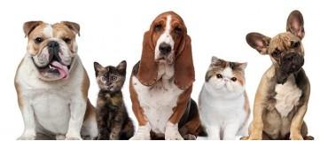 Plano de saúde para cachorro – Health For Pet